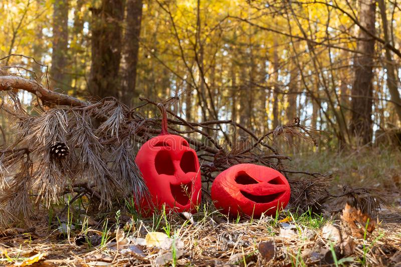 Two funny pink colored halloween pumpkins, a symbol of the feast of all saints. on dried grass among the needles. under the old royalty free stock image