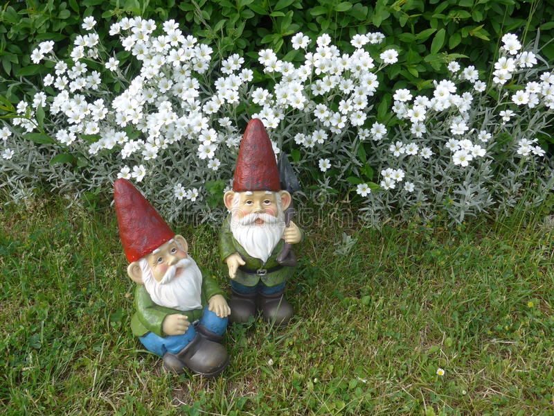 Two funny garden gnomes with red hats. Sit in front of white flowers royalty free stock photos