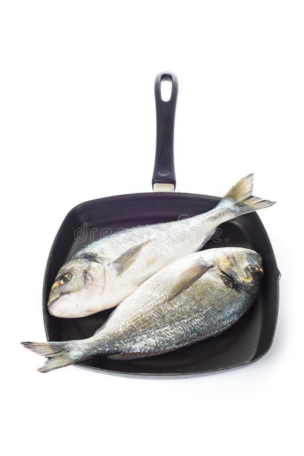 Two gilt-head sea bream fishes on a pan isolated. Two raw gilt-head sea bream fishes on a pan isolated over a white background royalty free stock photography