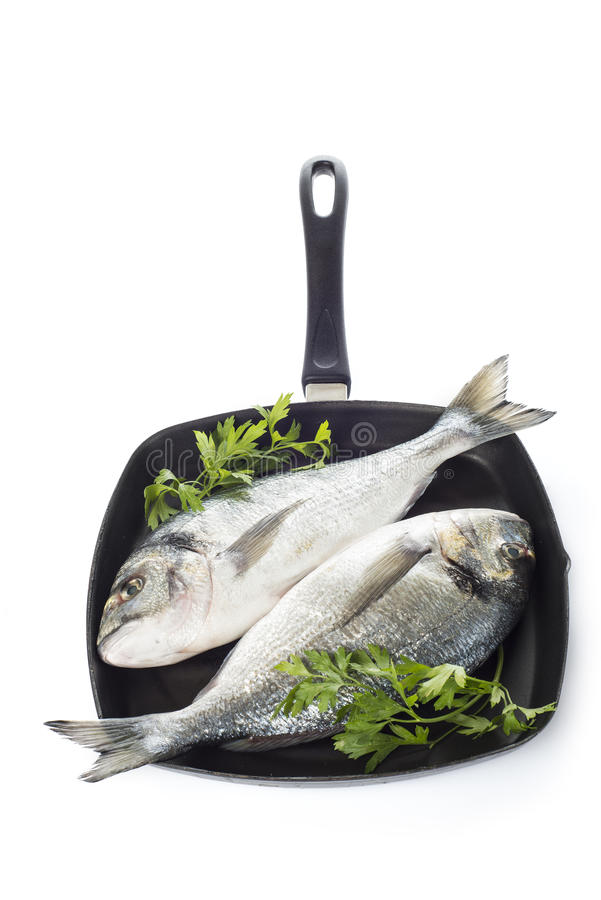 Two gilt-head sea bream fishes on a pan isolated. Two raw gilt-head sea bream fishes on a pan isolated over a white background royalty free stock photo