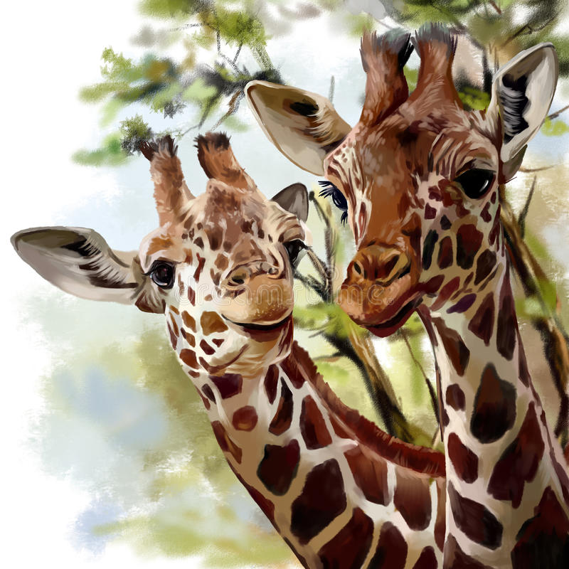 Free Two Giraffes Stock Images - 86285024