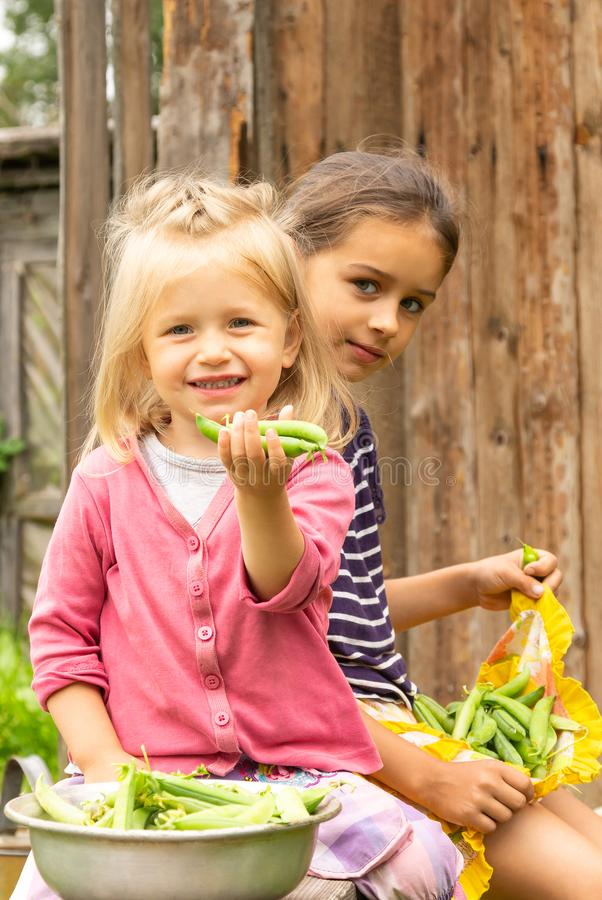 Two girl sisters holding a lot of green peas pods in their hands near a bowl full of ripe pea pods and smiling royalty free stock images