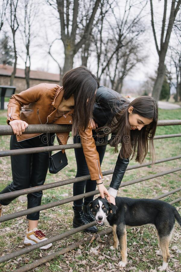 Two girls caress dog in the park. Young women wearing fashion clothes pet a homeless dog in green city park stock photos