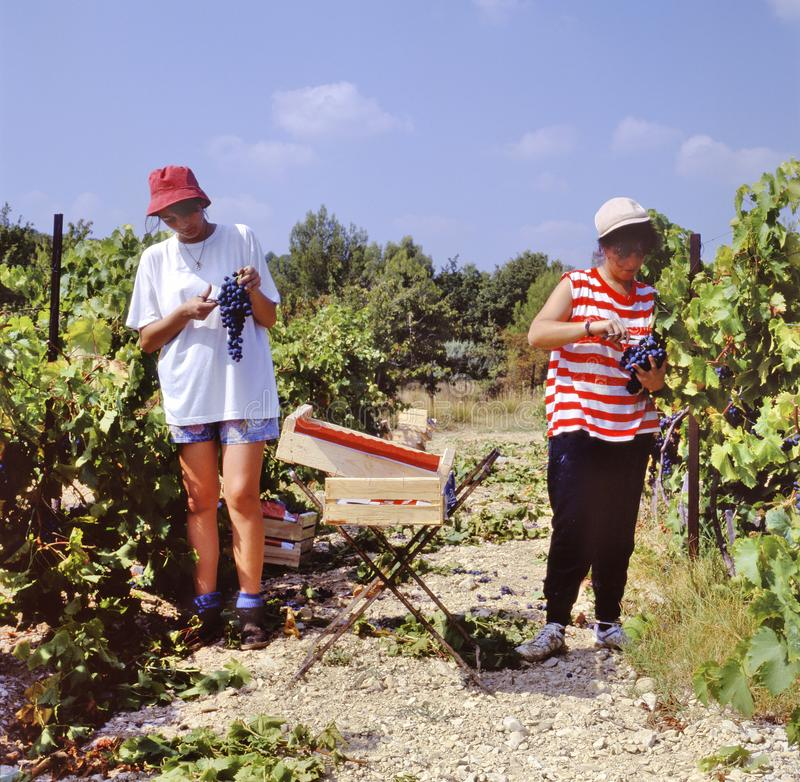 Two girls harvesting grapes in France stock photography