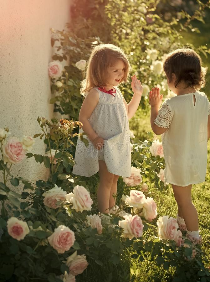 Two girls smiling at blossoming rose flowers royalty free stock photos