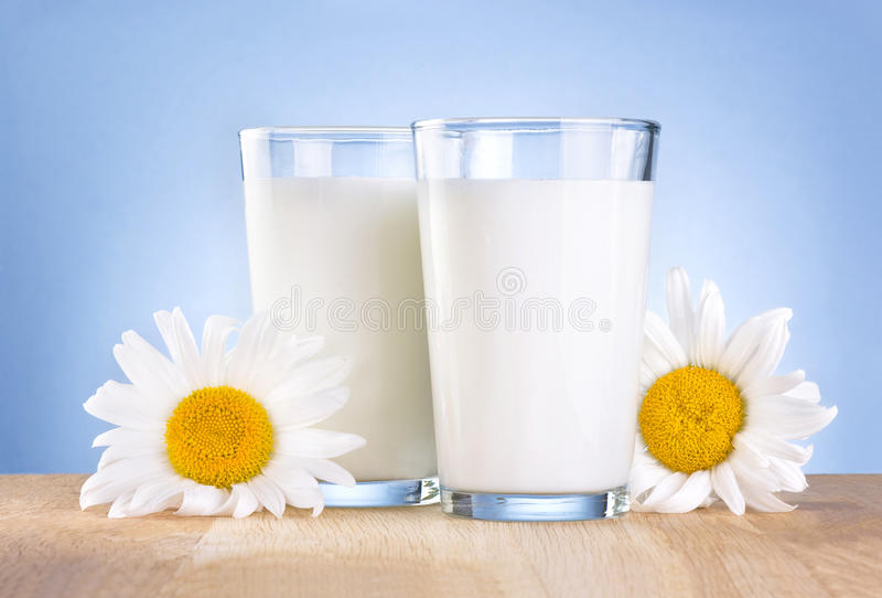 Two Glass milk and chamomile is wooden table royalty free stock photography
