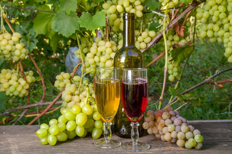 Two glasses of red and white wine and a bunch of grapes on old w royalty free stock image