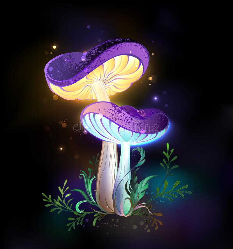 Free Two Glowing Mushrooms On Black Background Royalty Free Stock Image - 213300696