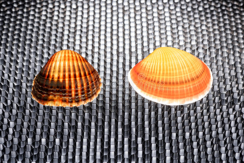 Two glowing shells on a black structured background with honeycomb pattern royalty free stock photo