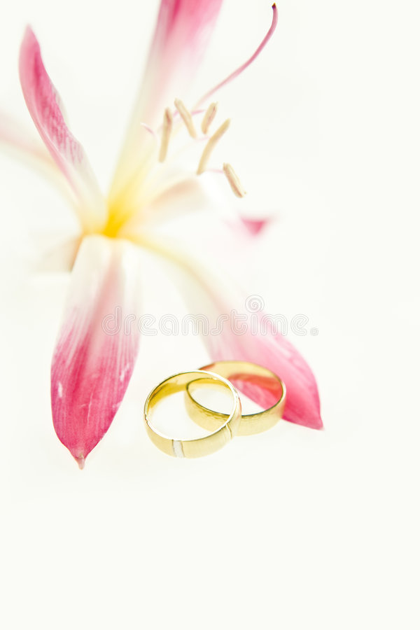 Two gold wedding bands beside a fresh red flower royalty free stock photo
