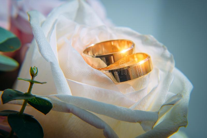 Two gold wedding rings on white rose bud, close-up. Classic rings for bride and groom, selective focus. Wedding and family concept.  royalty free stock images