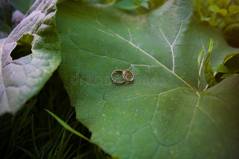 Two Golden wedding rings lie on leaves plant. stock image