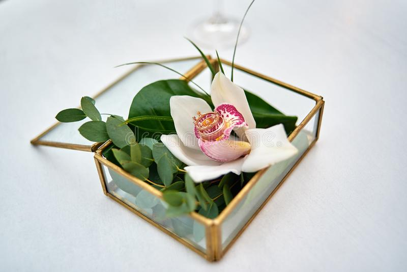 Two golden wedding rings on white orchid flower in transparent glass box, copy space. Wedding card, Valentine's Day greeting. Wedding rings, copy space royalty free stock photo