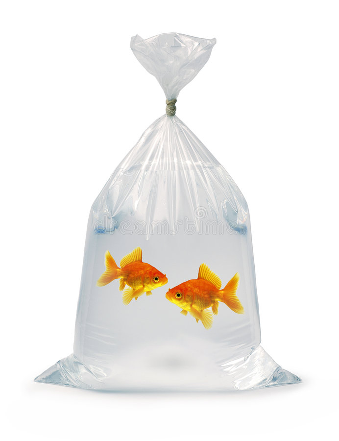 Two Goldfish in a bag royalty free stock photo