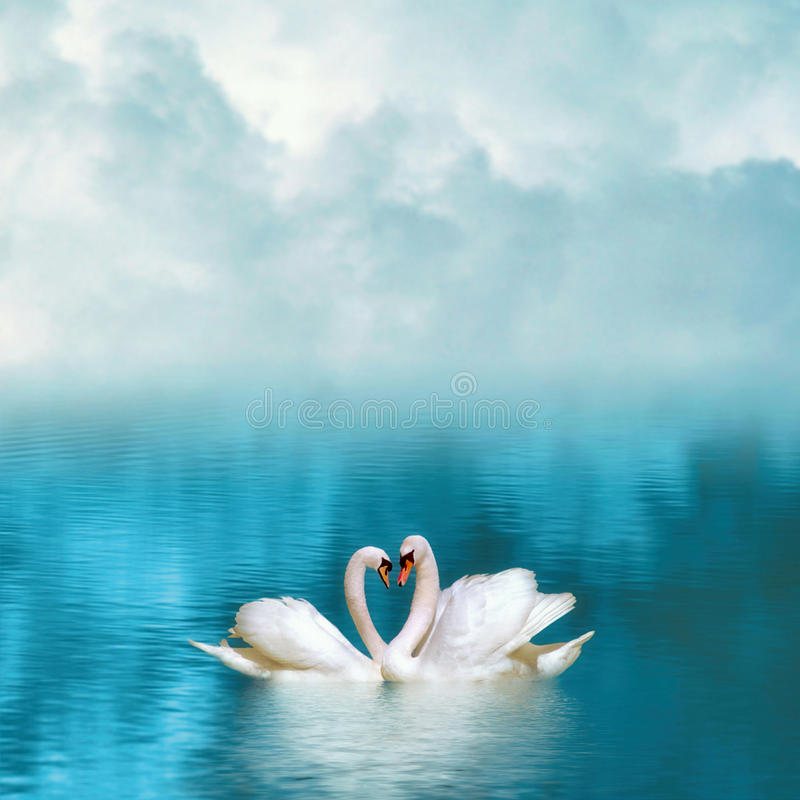 Two graceful swans in love reflecting in calm emerald water royalty free stock photos