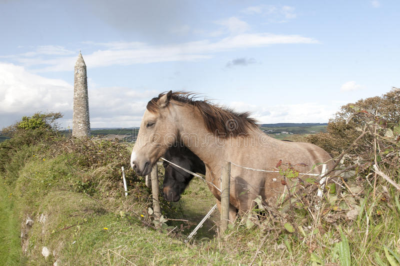 Download Two Grazing Irish Horses And Ancient Round Tower Stock Photo - Image: 33298536