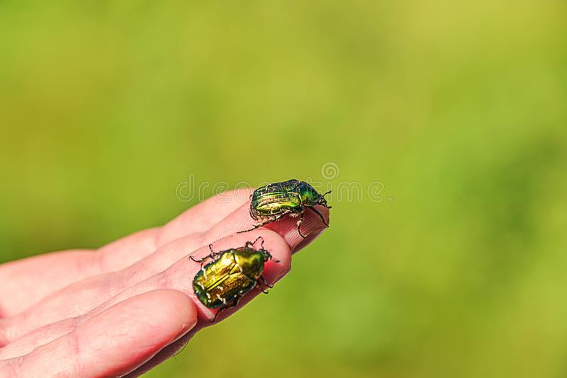 Bug sits on the hand royalty free stock photos