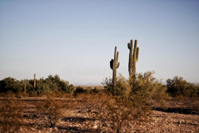 Two Green Cactus Plants at Daytime stock photography