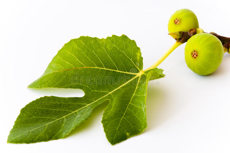 Download Two green figs and a leaf stock photo. Image of fruits - 16204938