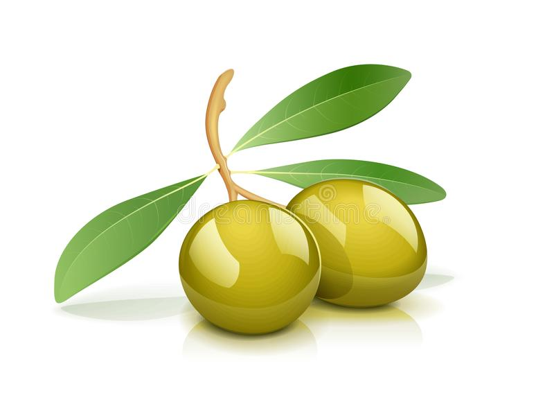 Two green olive with leaf vector illustration