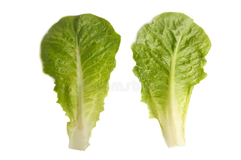 Green lettuce romaine. Two green romaine lettuce isolated on white background royalty free stock photo