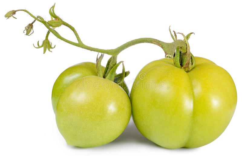 Two green tomatoes isolated stock image