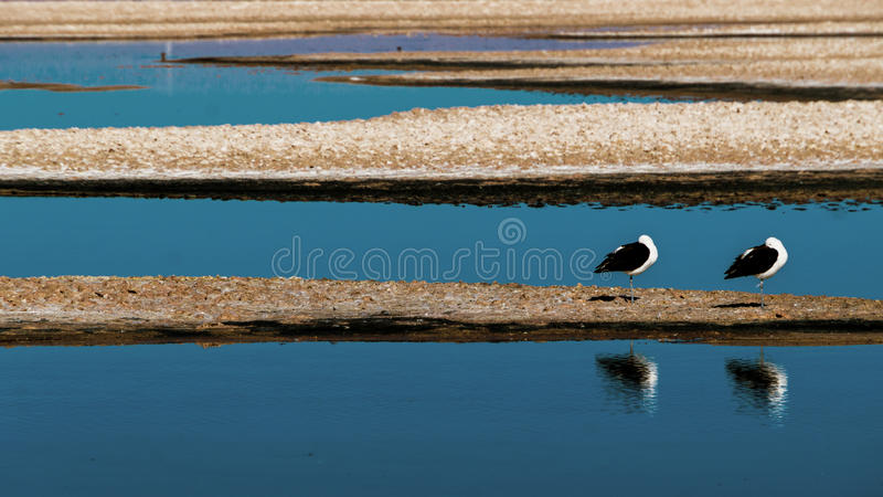 Two gulls in the lake royalty free stock photos