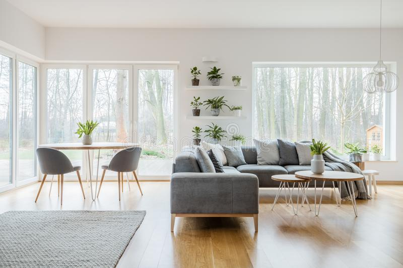 Two hairpin tables with fresh tulips standing in bright living room interior with potted plants, windows, corner couch and carpet stock photography