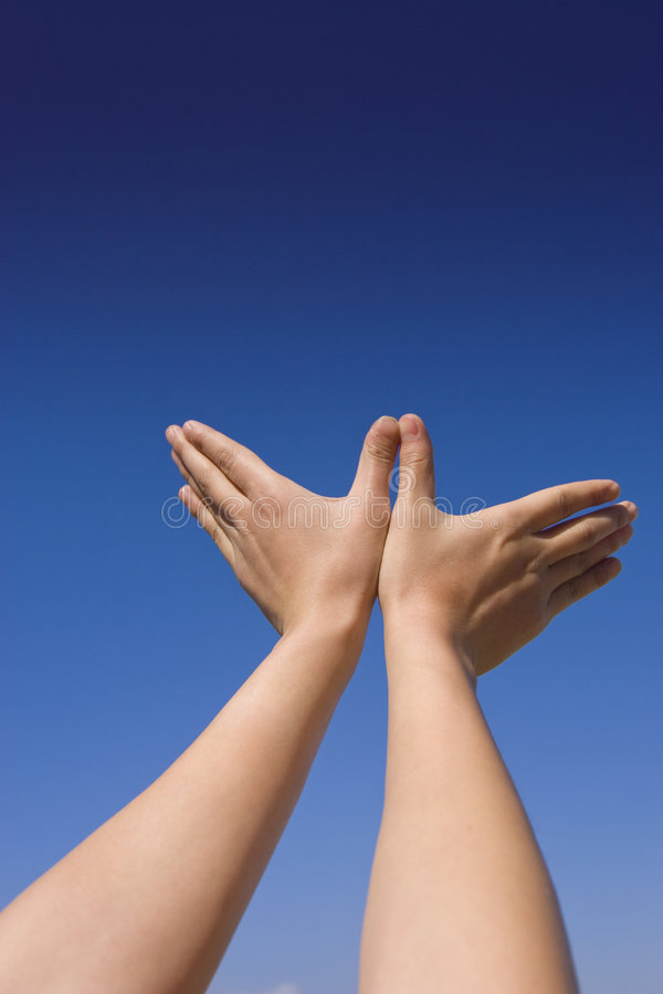 Free Two Hands Royalty Free Stock Photo - 7989375