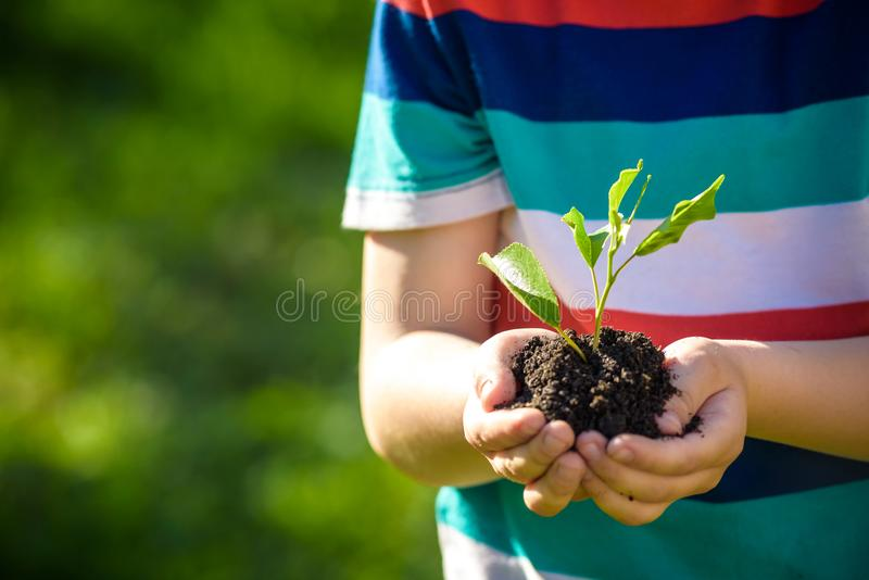 Two hands of the children are planting the seedlings into the soil. stock photos