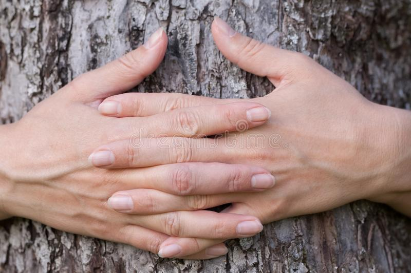 Two hands clasp a tree bark stock photos