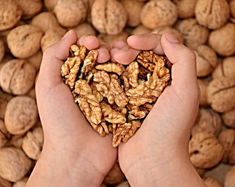 Two hands full of walnuts making heart sign royalty free stock images