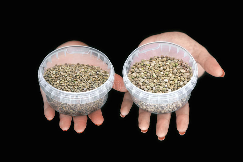 Two hands with hemp seeds in plastic containers. On a black background stock image