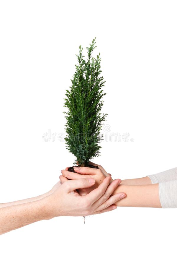 Couple hands holding young tree. Earth Day April 22 concept. Save world. Environmental Ecology Plant Nature Conservation stock photography