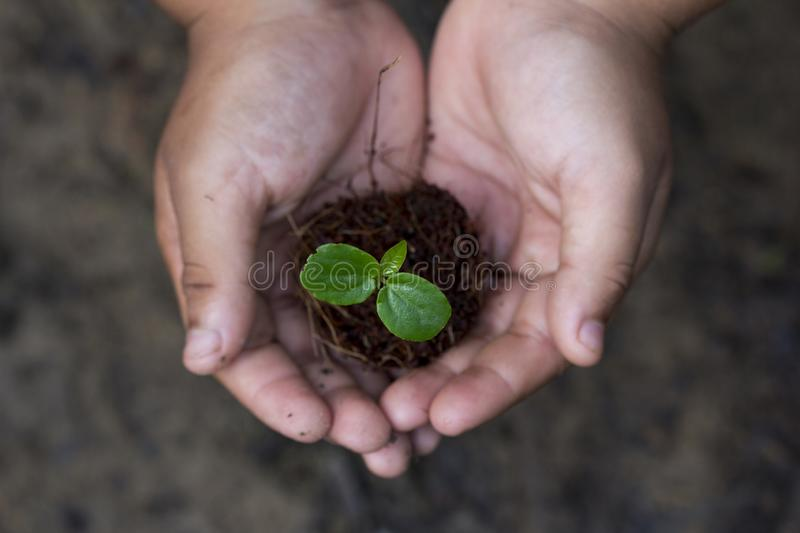 Two hands of the Kids was carrying a bag of potting seedlings or young plant to be planted into the soil on nature background royalty free stock photo