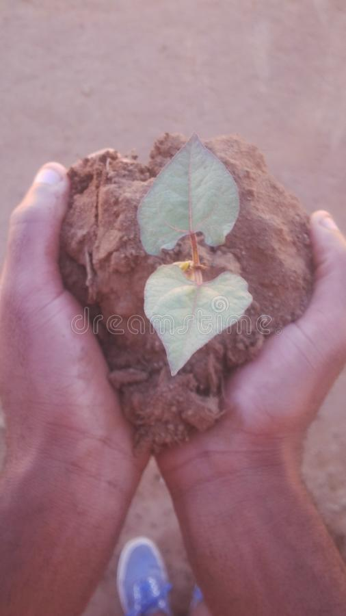 Hands holding a plant and soil. Two hands of a person holding a plant by soil,this symbolises the fact that,everyone`s future is in his/her hands royalty free stock photos