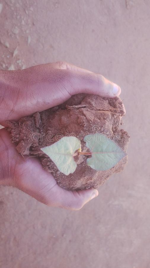Hands holding a plant and soil. Two hands of a person holding a plant by soil,this symbolises the fact that,everyone`s future is in his/her hands stock image