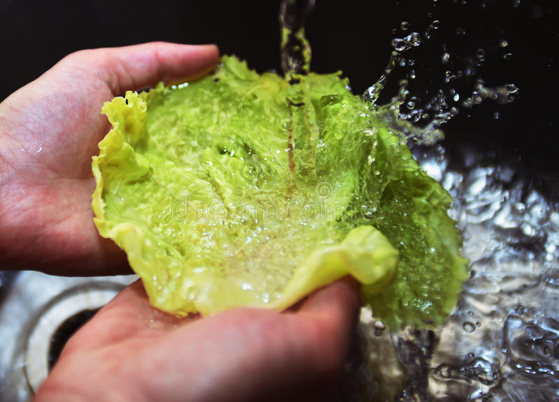 Two hands Washing lettuce in a sink stock images