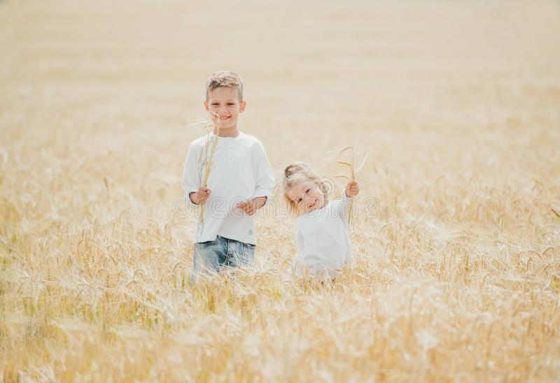 Two happy kids with ears in wheat field on summer day. Portrait of cute little children with ears in wheat field on summer day royalty free stock images