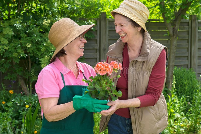 Two happy senior ladies gardening together. Two happy senior ladies gardening together laughing and chatting over a colorful potted flower in a lush spring stock photos