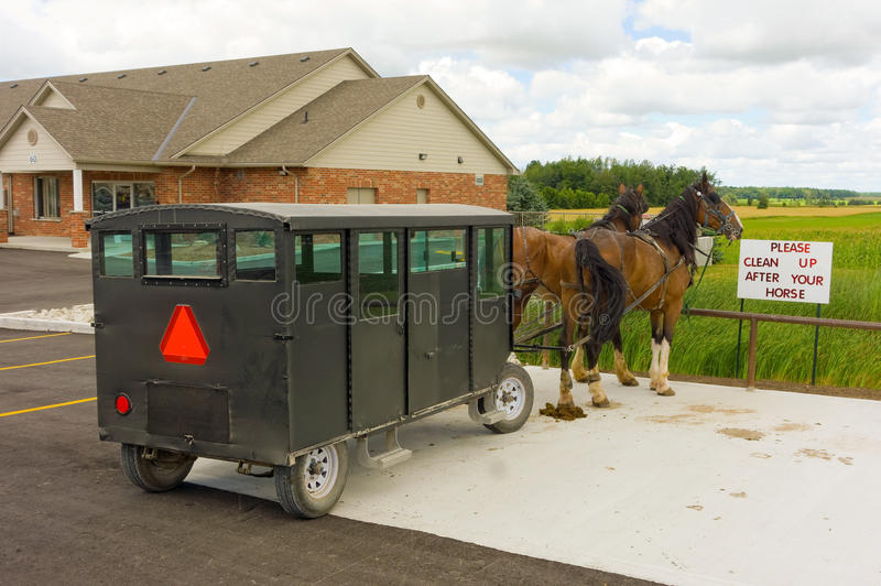 Two harnessed horses used to pull an amish wagon stock photos