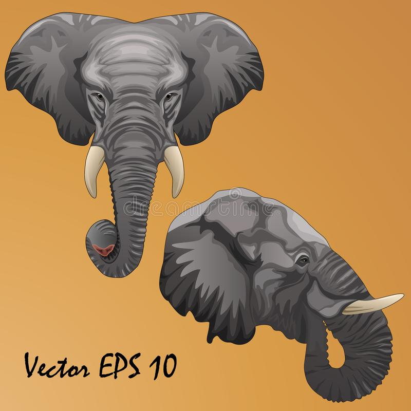 Two heads of African elephants - in profile and full face stock illustration