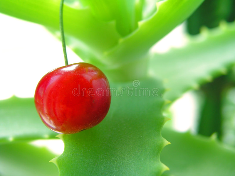 Two health products 1 stock images