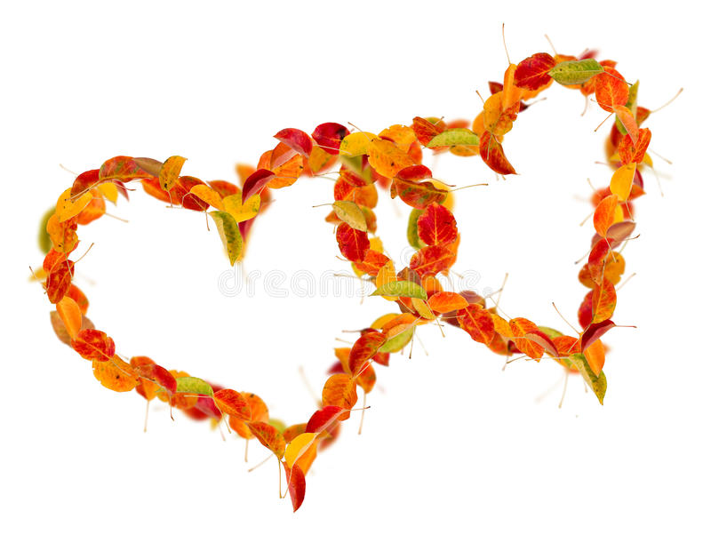 Download Two Hearts Of The Autumn Leaves Stock Image - Image: 15987029