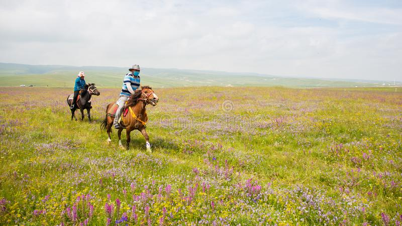 Two herdsmen ride horses on meadows. stock images