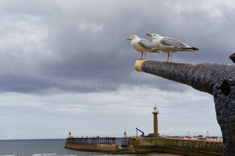 Two Herring Gulls Stood on an Old Steamer Gun. royalty free stock photography