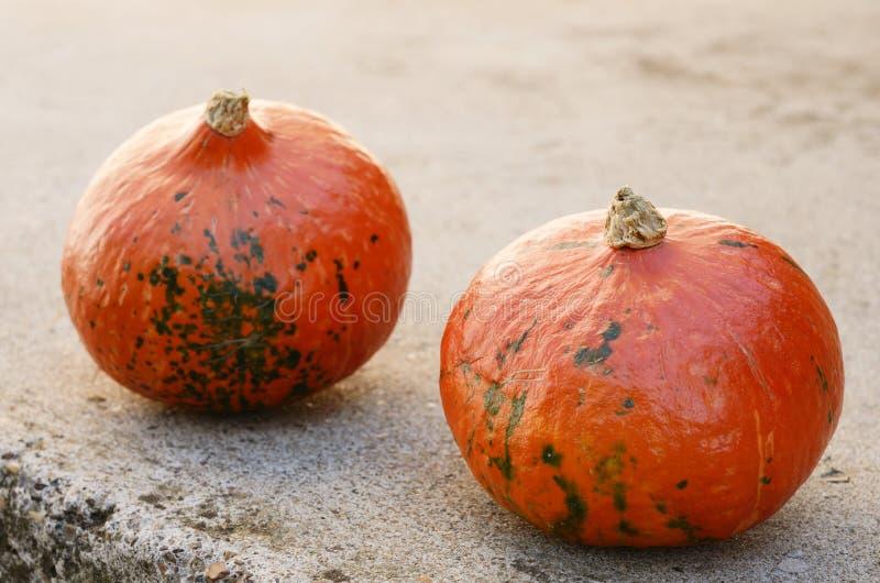 Two hokkaido pumpkins on concrete background