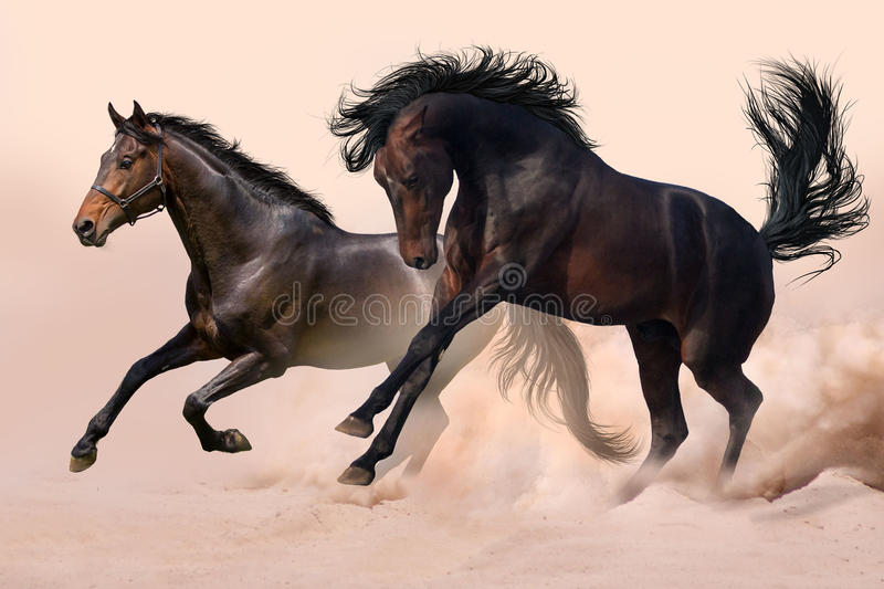 Two horse in dust royalty free stock image