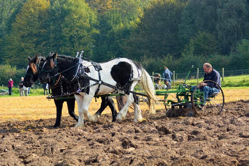 Horse`s  Ploughing field. A two  horse ploughing team work a field in the countryside conjuring up memories of how farming used to be done stock photography