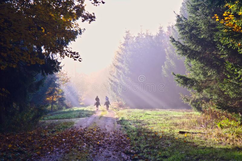 Two horse riders in an autumn forest stock photography